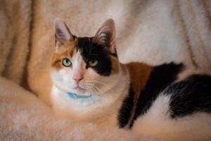 Kippy - Our Cat
